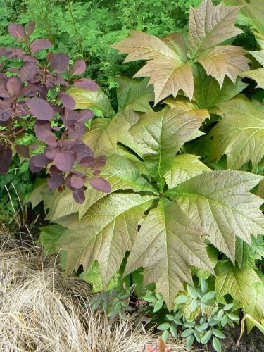 Plant : Variatie in blad