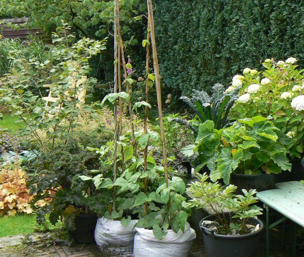 Eetbare tuin 4 bloemen in de tuin for Tuinontwerp eetbare tuin