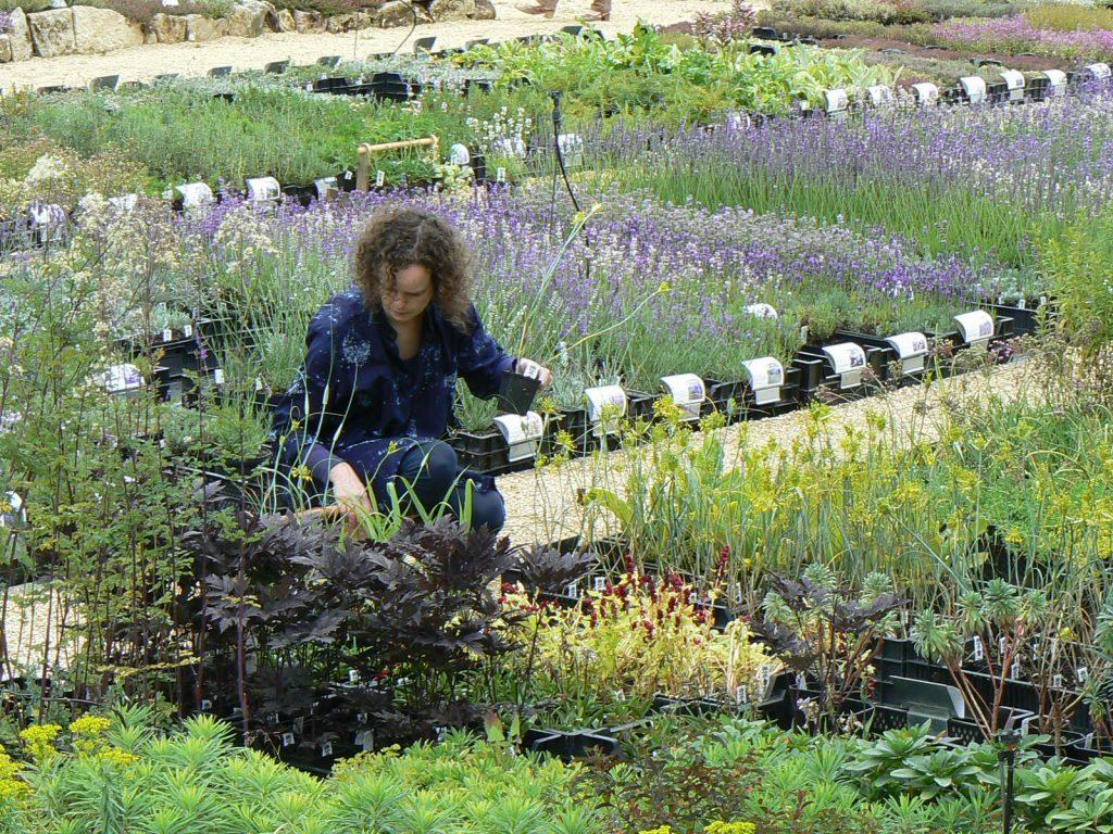 Op zoek naar planten voor een klant