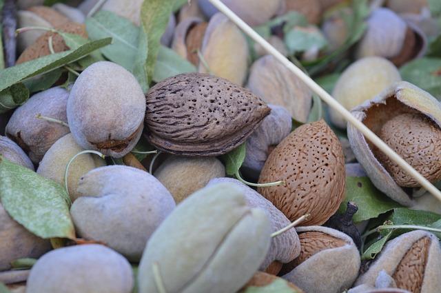 Vrucht en zaden met daarin de amandel