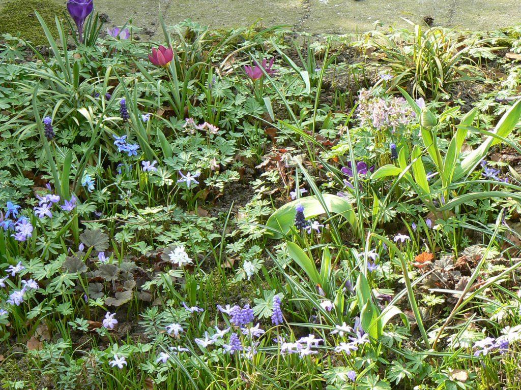 Verwilderingsbolletjes horen bij het voorjaar.