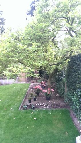 Rhododendron, Carex, Hosta en Primula
