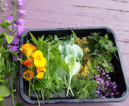 Blog archieven bloemen in de tuin tuinontwerp for Tuinontwerp eetbare tuin